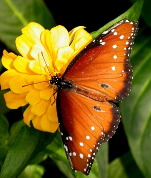 http://www.whenwegetthere.com/tourist_attraction_images/land_tourist_attractions/butterfly_watching/butterfly_watching.jpg